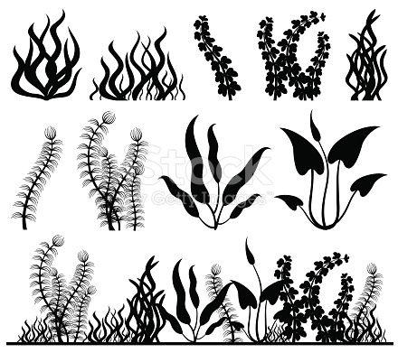 Sea Plants And Aquarium Seaweed Vector Set Nature Seaweed Black Aquarium Drawing Sea Plants Plant Drawing