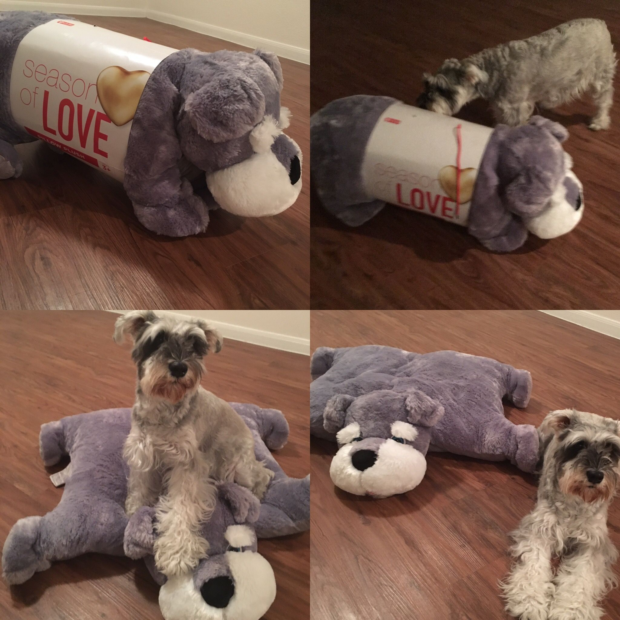 Must have pet pillow for schnauzers ️ walgreens 19.99