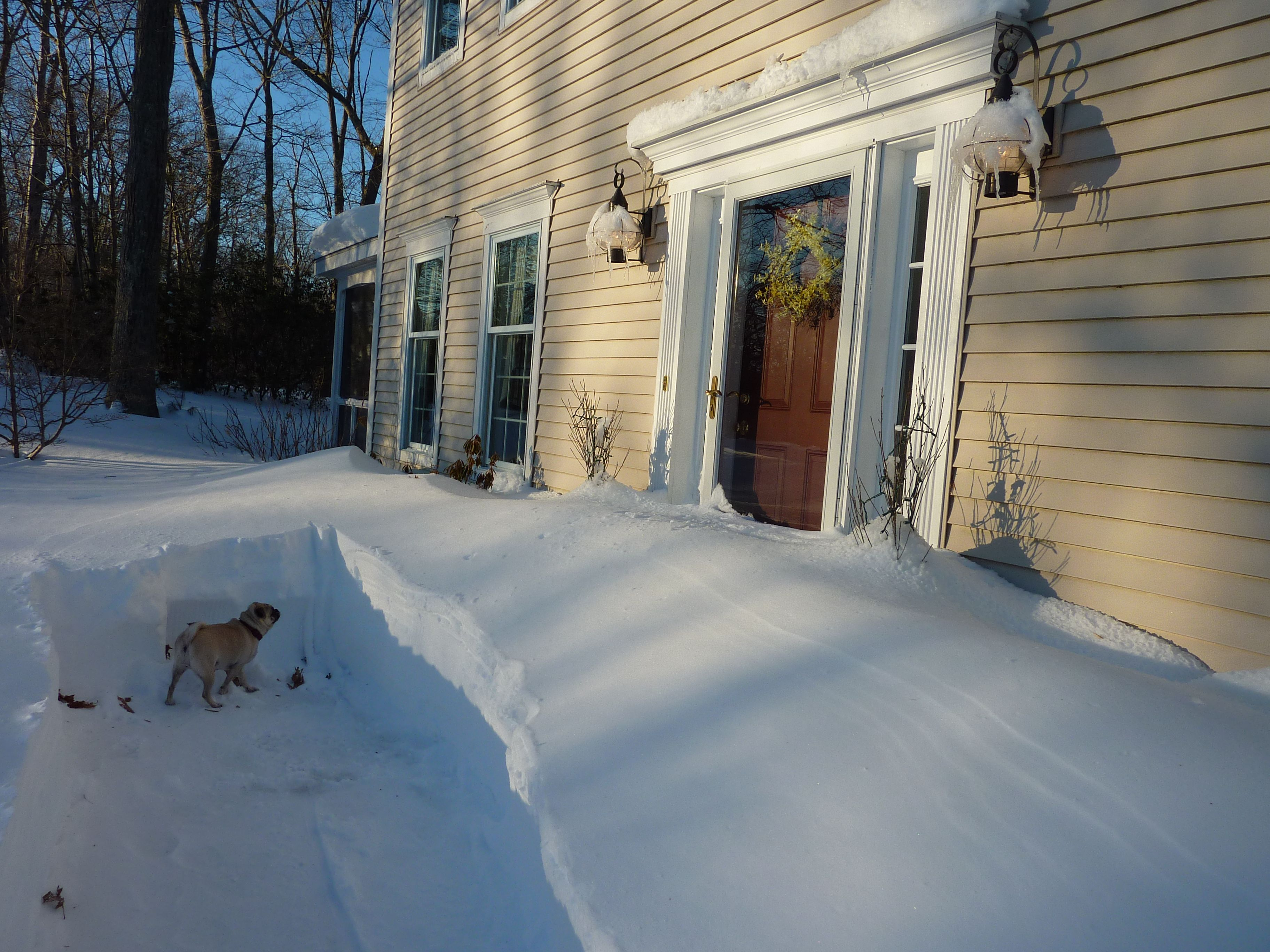 Um...how do I get to my front door?? (Arkansas born Tallulah ponders the enormity of a Connecticut blizzard)