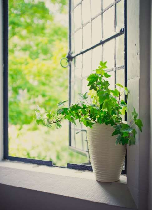 You can breathe easier around this simple-to-care-for English Ivy — it's rated as one of the top pla... - M. Ivkovicundefined