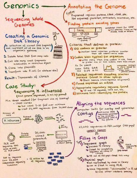 Intro to Genomics | Torin | Pinterest | Genetics, Chemistry and School