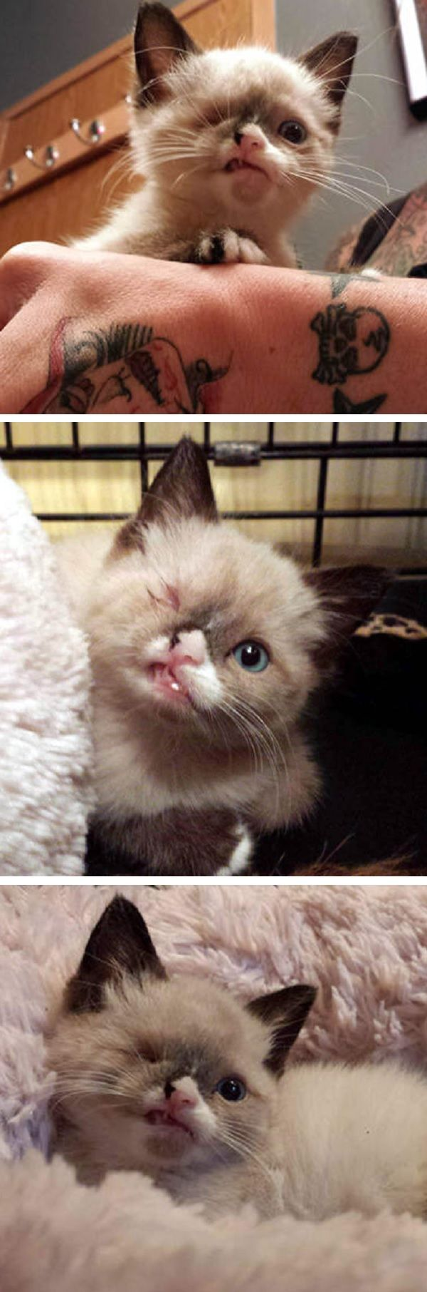Kitten Survives A Raccoon Attack But What Happens Next Will Break Your Heart With Images Kittens Animals Kittens Cutest