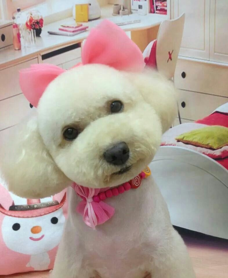 Example Of Asian Fusion Styling Dog Grooming Diy Pet Grooming