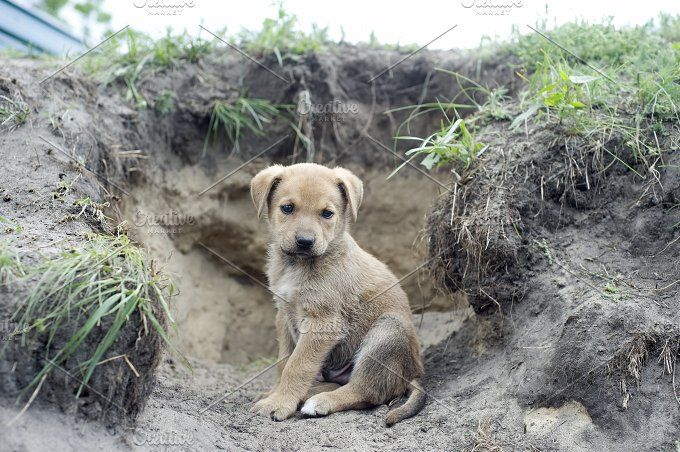 Homeless Puppy Homeless Dogs Dog Rescue Uk Dogs