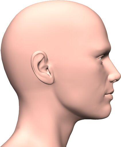 Side view face | Anatomy Resources | Pinterest | Face ...