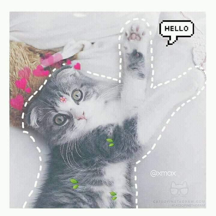 Ghim Của Maysaa Tren Boss Meo Kitty động Vật Meo