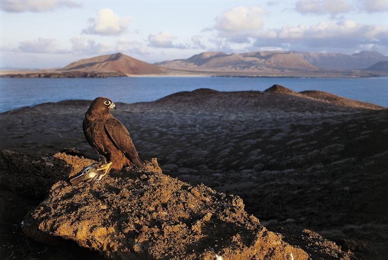 Las Palmas de Gran Canaria, 3 ago (EFE).- La erupción de la isla de Krakatoa de 1883 provocó tal cataclismo, que esterilizó los pocos restos…