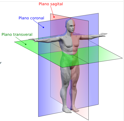 32+ The frontal plane divides the body from front to back ideas