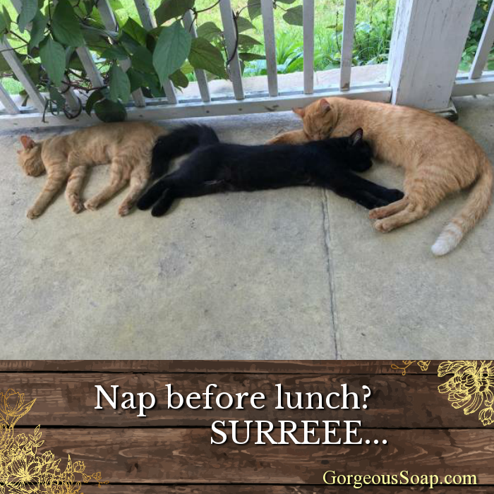 Nap before lunch? Surreee... Cats and kittens, Homemade