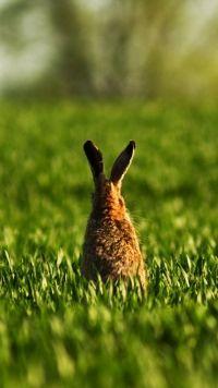 Animal Rabbit Rabbits Mobile Wallpaper