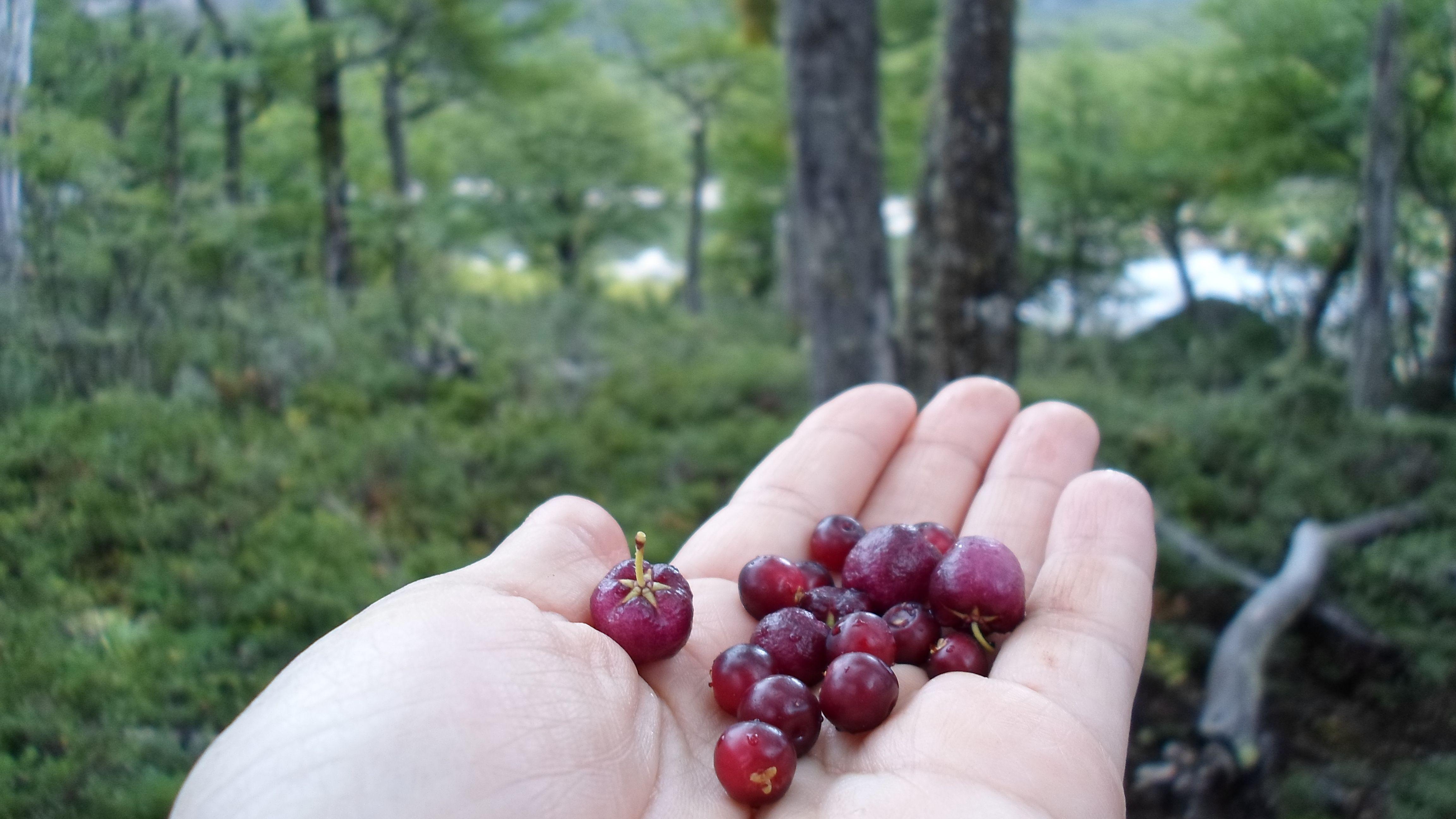 Motillas Wild berries - Santa Cruz Patagonia Argentina
