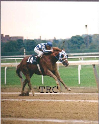 SECRETARIAT - ORIGINAL 1973 WOODWARD PHOTO! in Sports Mem, Cards & Fan Shop, Fan Apparel & Souvenirs, Horse Racing | eBay