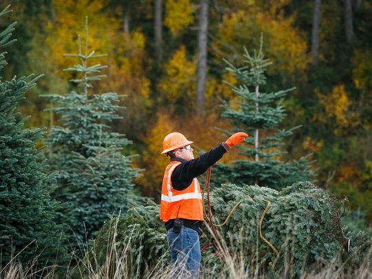 Christmas Trees Will Be More Expensive This Year Amid Shortages In Oregon North Carolina Christmas Tree Tree Flower Pictures