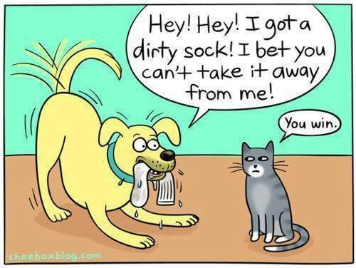 Funny Dog And Cat Cartoon Funny Cartoons Cartoon Dog Funny