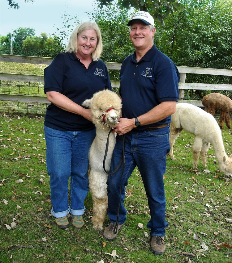 Alpacas at Whiskey Creek -- friends and customers of FeltLOOM