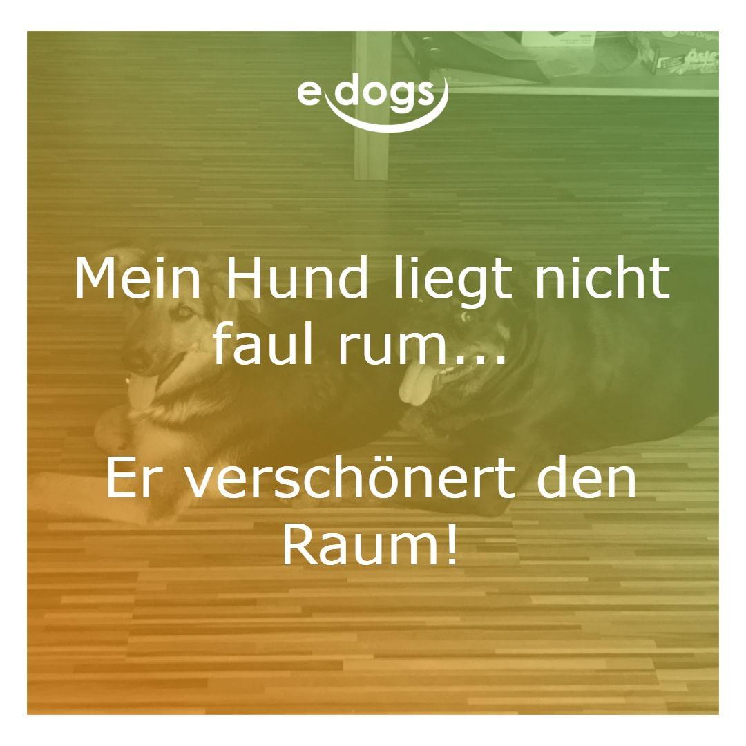 Mein Hund Liegt Nicht Faul Rum Er Verschonert Den Raum Hundeliebe Edogs Traumhund Hundezitate Hundemensch Hundespru Hundespruche Hunde Hund Zitat