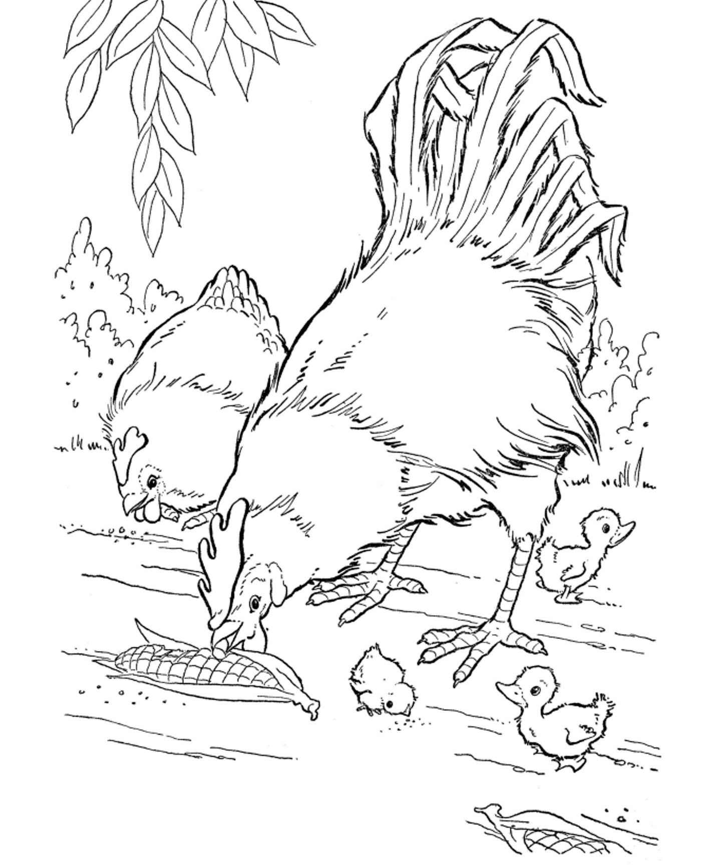 Realistic Chicken Coloring Pages To Print In 2020 Farm Animal Coloring Pages Farm Coloring Pages Chicken Coloring Pages