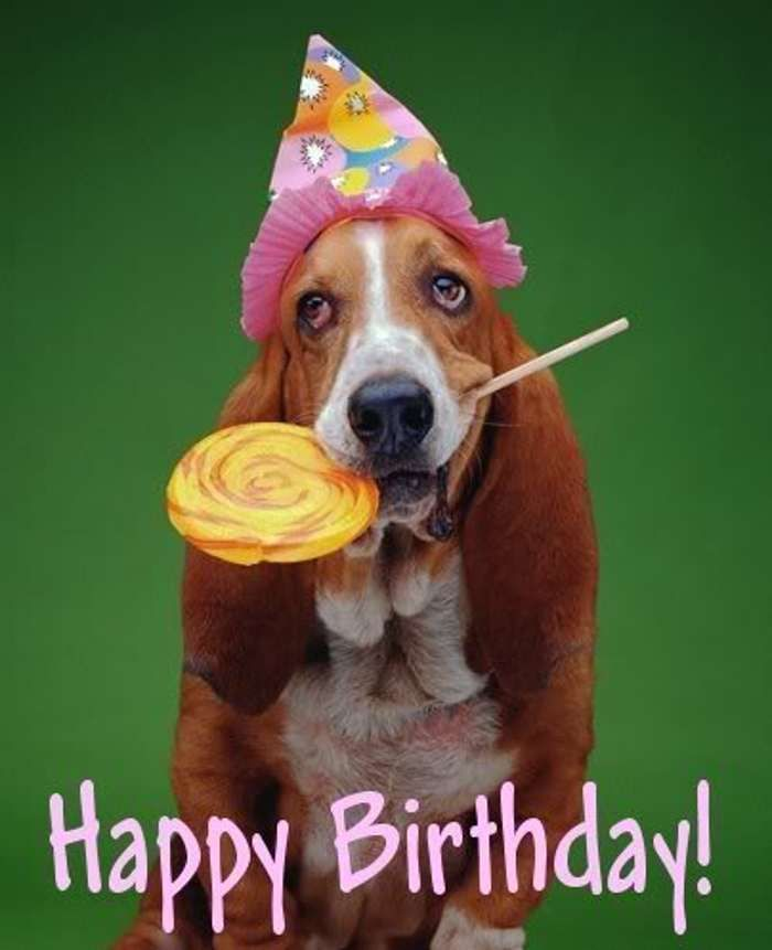 Happy Birthdaydogs Happy Birthday Pictures With Dogs With