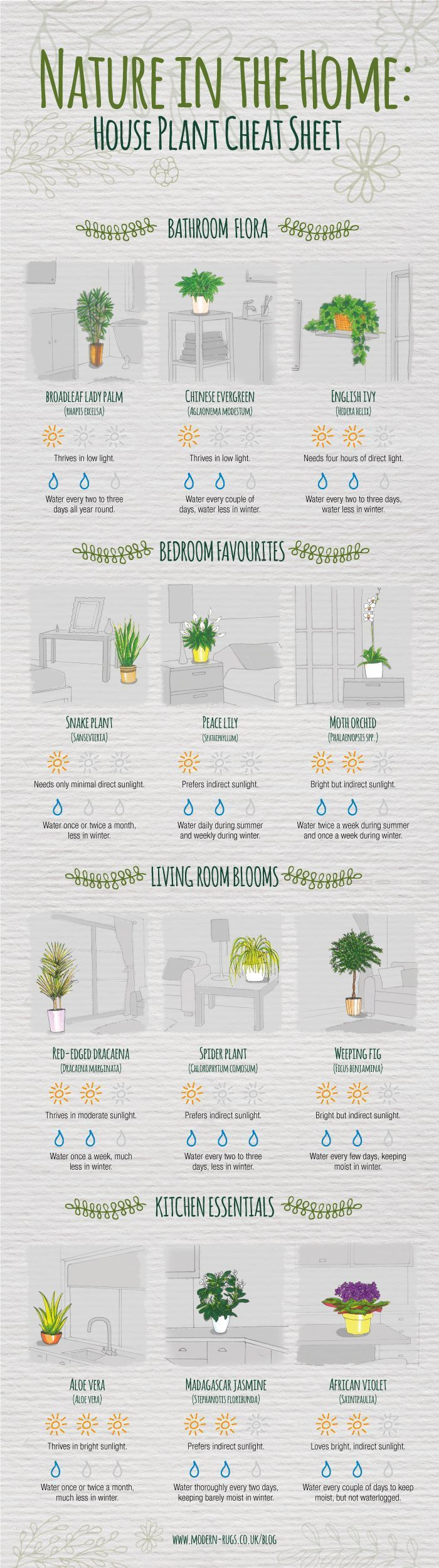 A Cheat Sheet That's Going to Save All of Your Houseplants Never question how much sunlight your spider plant needs again.Never question how much sunlight your spider plant needs again.