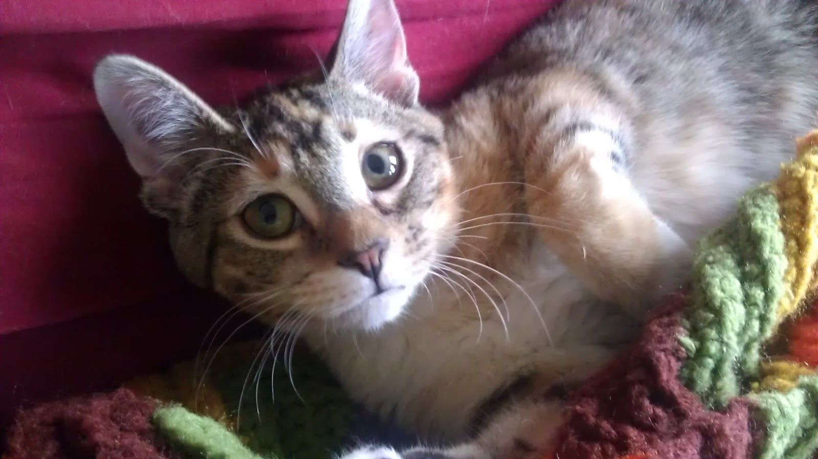 Hyde Park Cats Tnr Holly This Kitten Is Waiting For You Cats Hyde Park Cat Adoption
