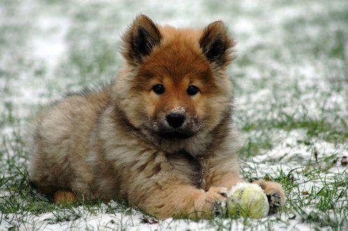 Welpen Fotos Cute animals, Puppies, Dog breeds