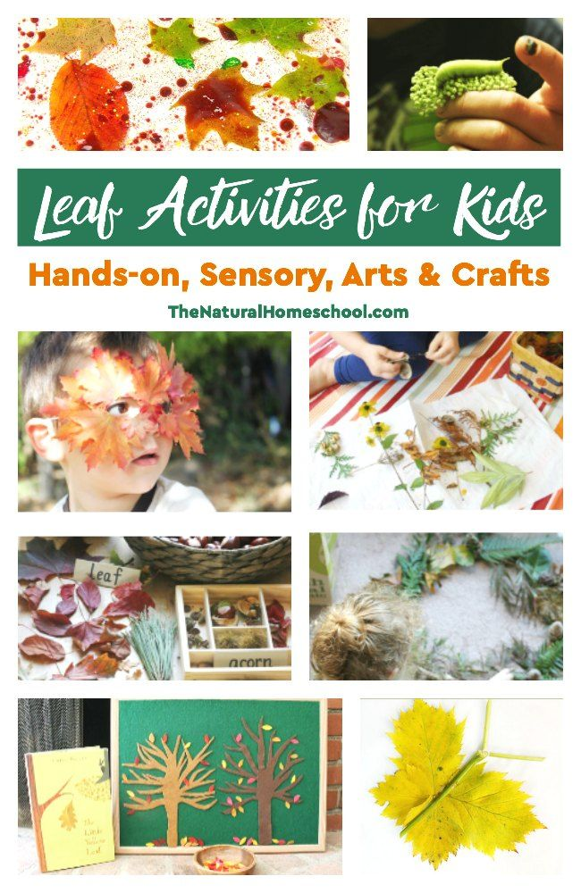Leaf Activities for Kids  Handson, Sensory, Arts & Crafts is part of Kids Crafts Activities Hands - In this post, we share a great list of leaf activities for kids  It includes handson and sensory activities, as well as some great leaf arts & crafts
