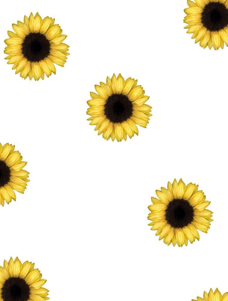Sunflower Tumblr Wallpaper Mobile Jllsly Sunflower