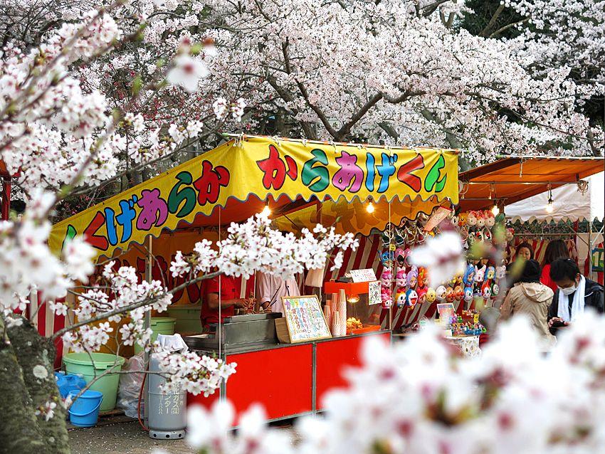2013.04.05 日岡山公園(兵庫県加古川市)