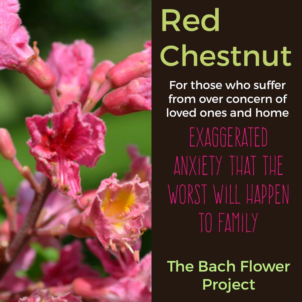 Bach Flower Remedy Red Chestnut Flower Essence Pinterest