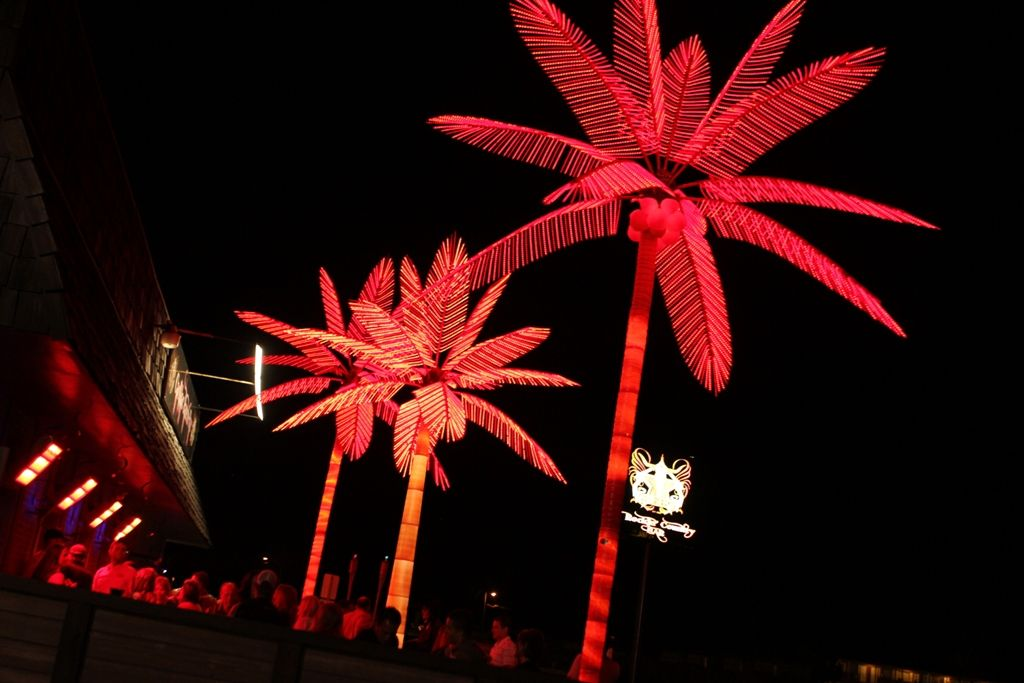 What Do You Mean You Didnt Expect Neon Palm Trees In Cheyenne