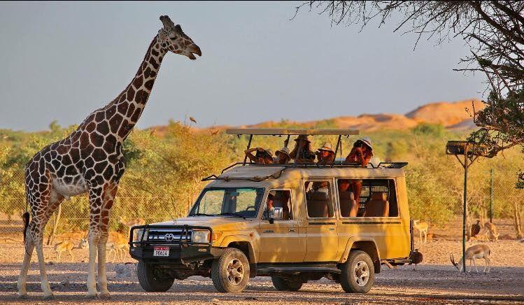 Day Tour In Sir Bani Yas Island Unforgettable Experience Day Tours Dubai Travel Tours