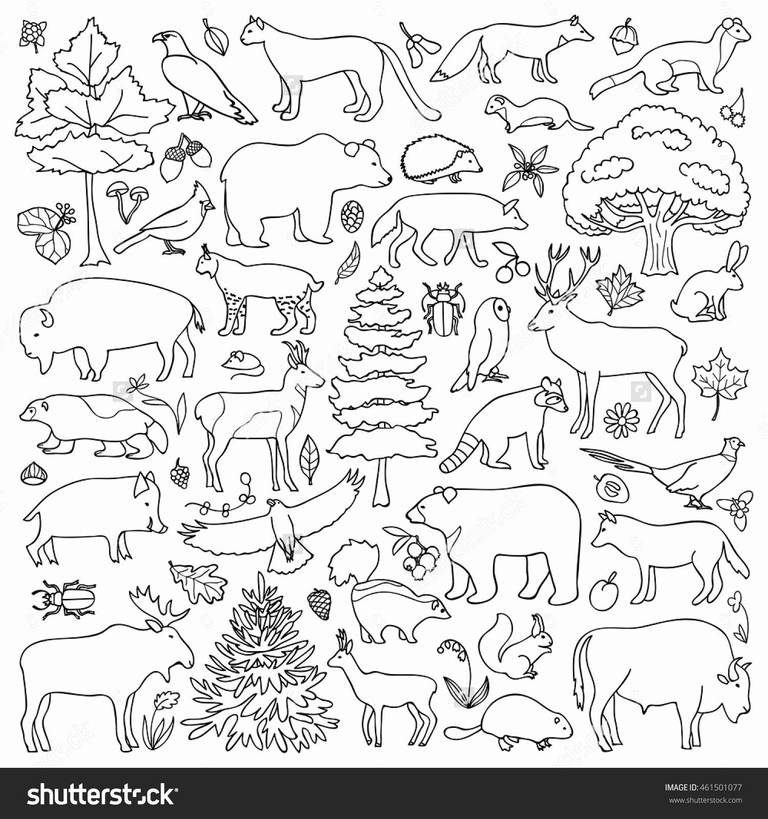 Pin By Petra Jiraskova On Lesni Klub Animal Coloring Pages Forest Coloring Book Preschool Coloring Pages [ 1600 x 1500 Pixel ]