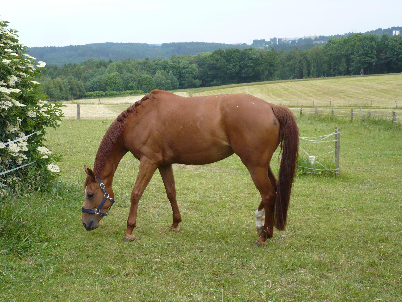 Pferd im Sauerland
