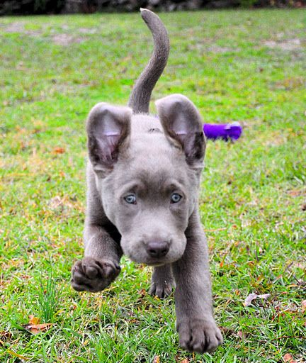 It's either a bat or a silver lab. Not sure. Very QT, though.
