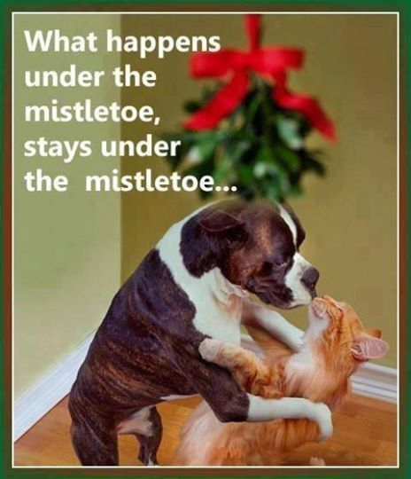 Under The Mistletoe Quotes Quote Pets Christmas Christmas Quotes Mistletoe