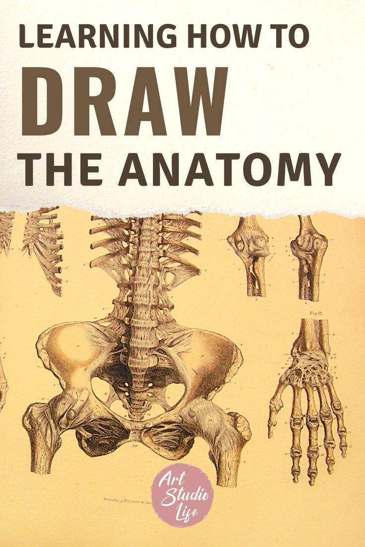 An artists guide to learning to draw the anatomy in 2020