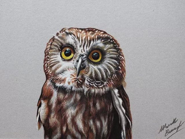 Pictures Of Real Colorful Owls