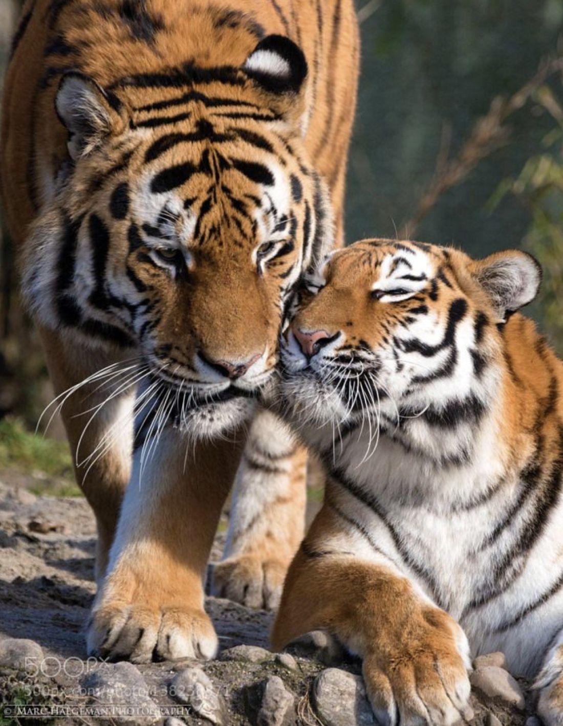 Idee Von Pia Auf Tiere Tiere Hubsche Tiere Majestatische Tiere