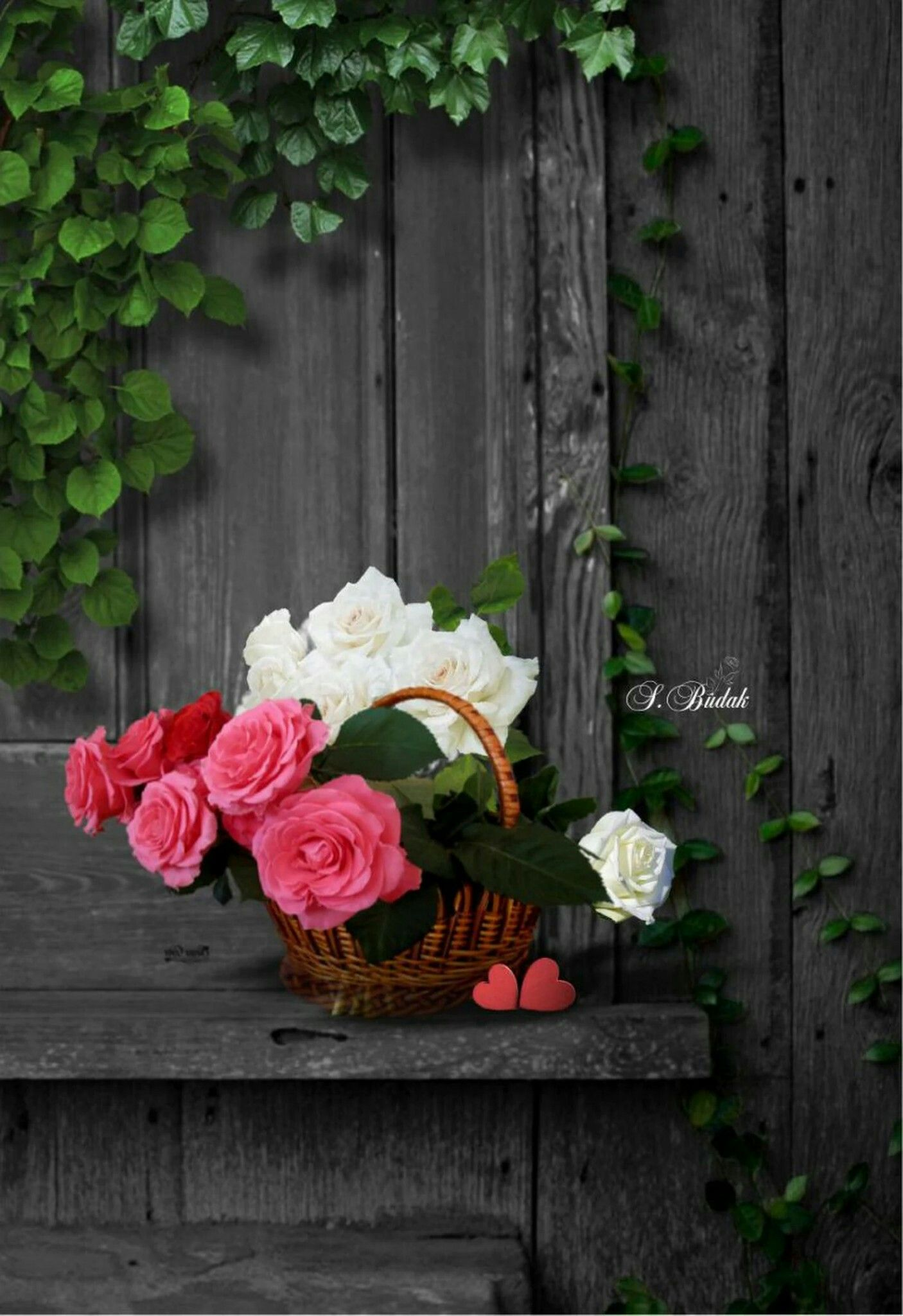 꽃 Flowers dp, Beautiful flowers, Flower arrangements