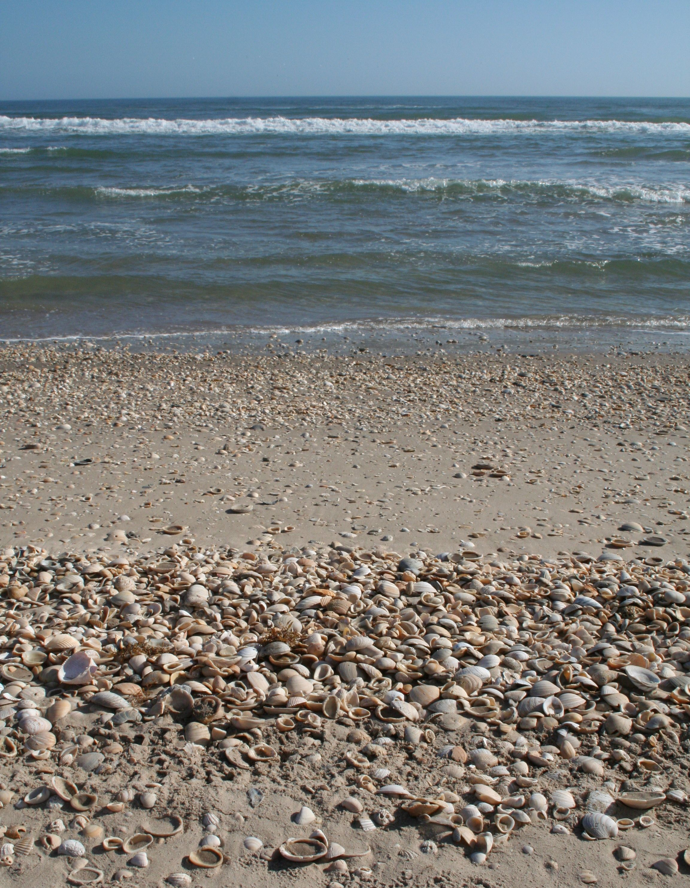 Shell Beach Padre Island National Seas Photo By Kathy Sanders Nps