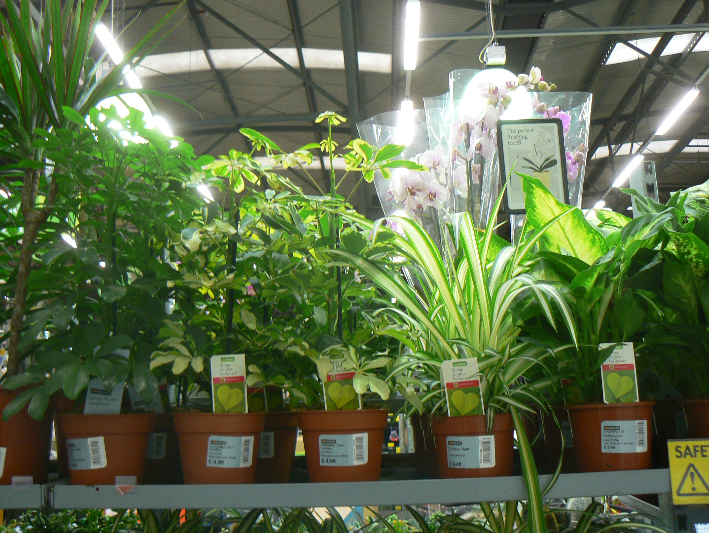 Homebase With Images Plants Homebase Garden