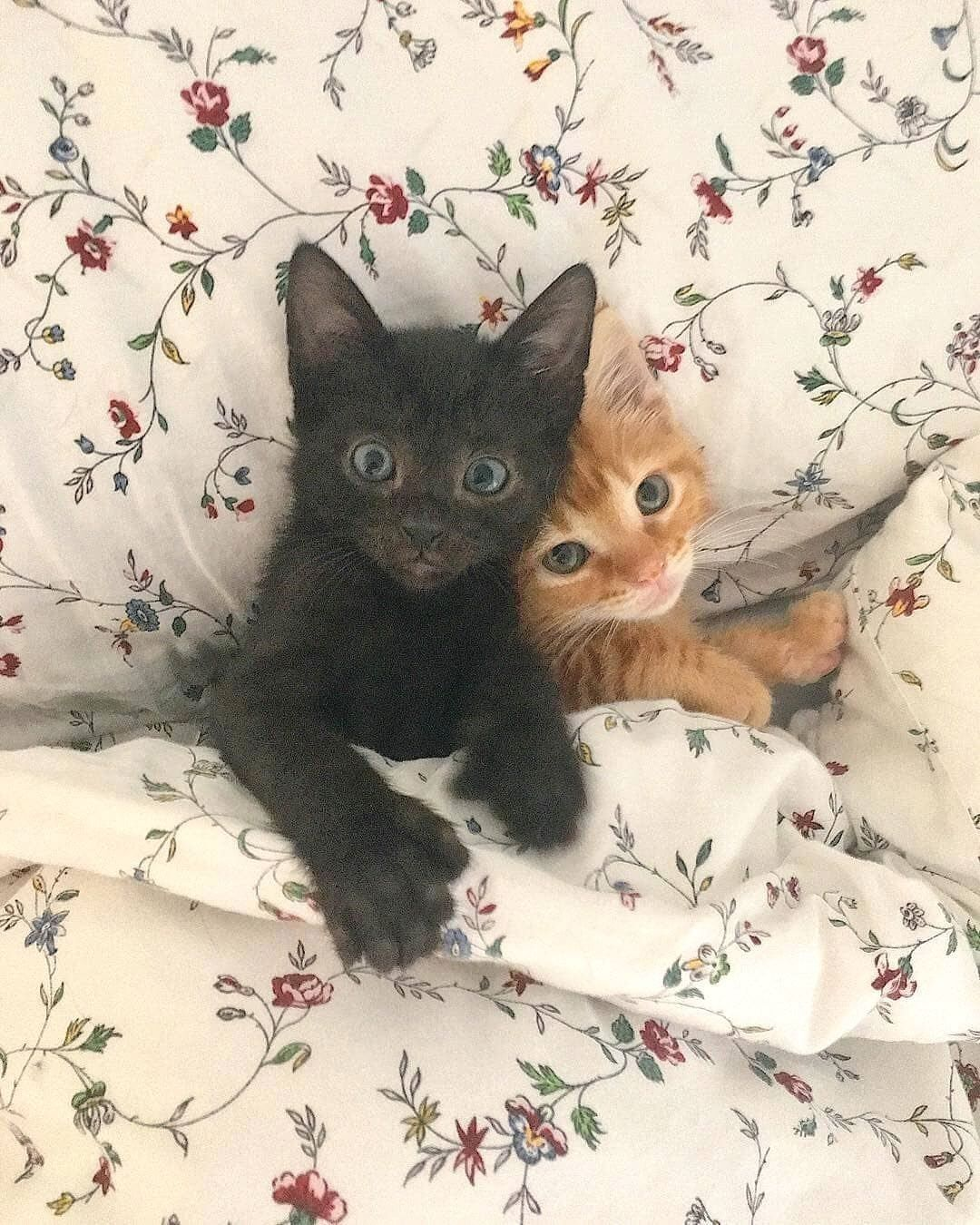 Cat Cats Igcats Instacats Catsofinstagram Catspeople Catpic Catpictures Catsbeingcats Bigcat Kitte In 2020 Cute Cats Cute Baby Animals Cute Cats And Kittens