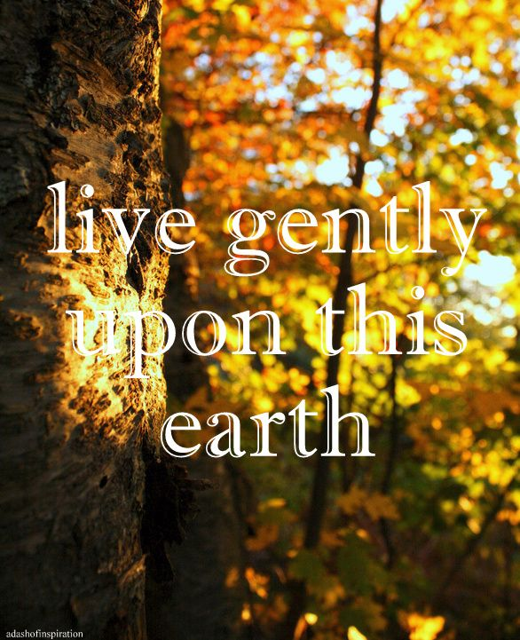 Earth Nature Quote Nature Quotes Nature Lover Quotes Words