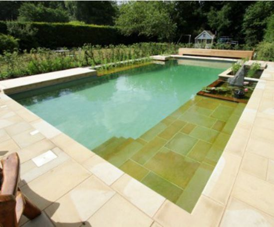 Natural swimming pool and koi pond by clear water revival for Koi pond natural swimming pool