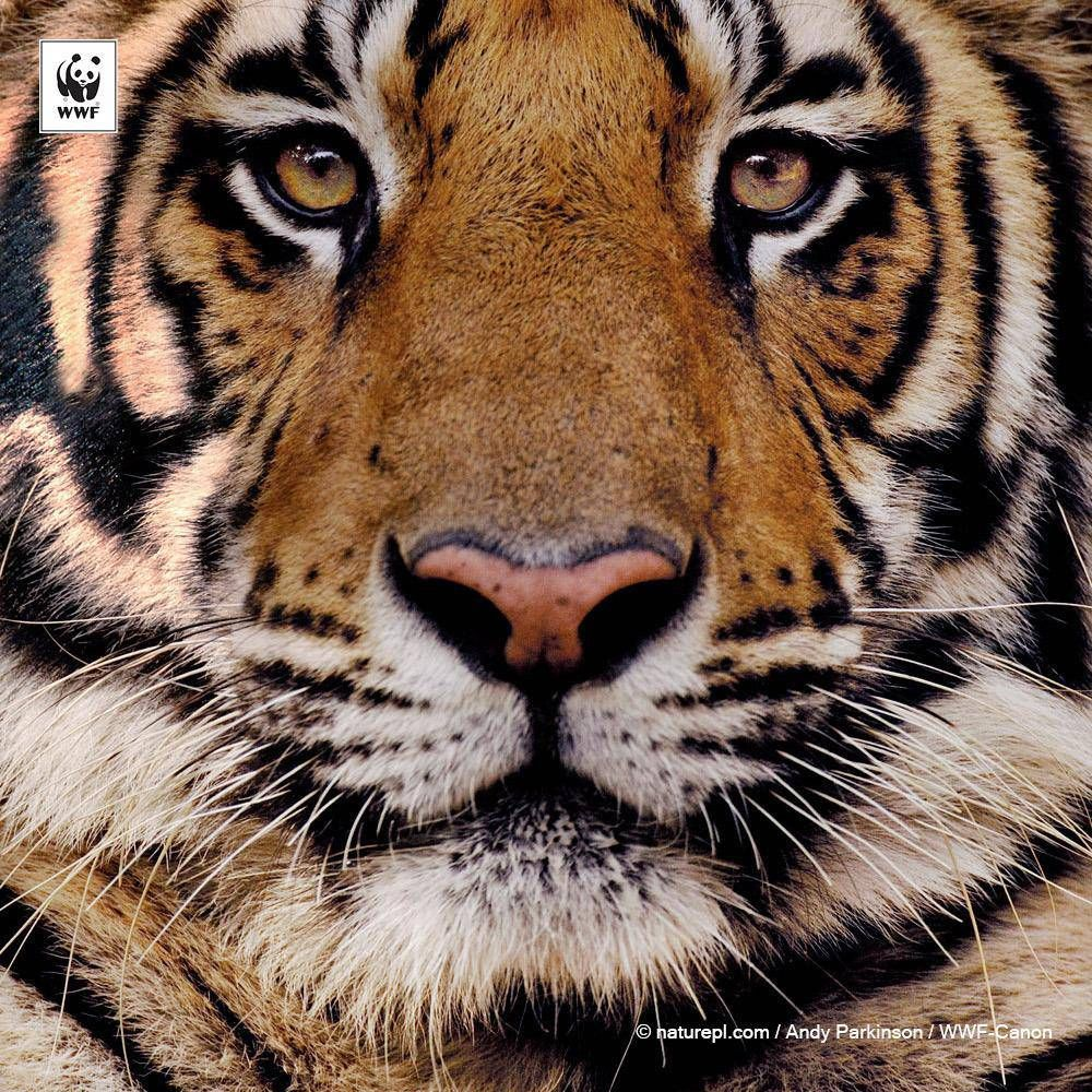 Pin by David Hendrick on Animal | Pinterest | Taps and Animal