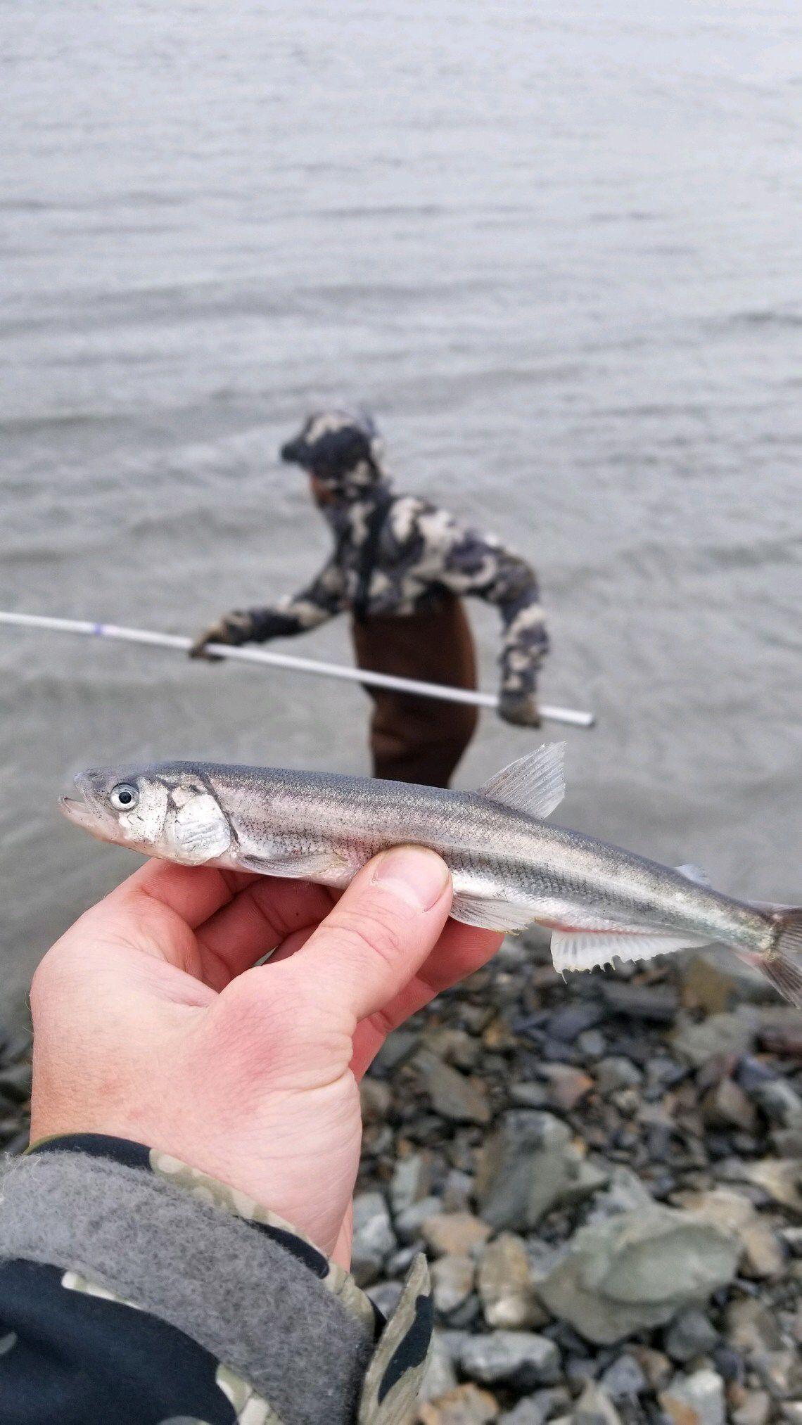 Fishing Fish Fishingtips Fishinglures Fishinghacks