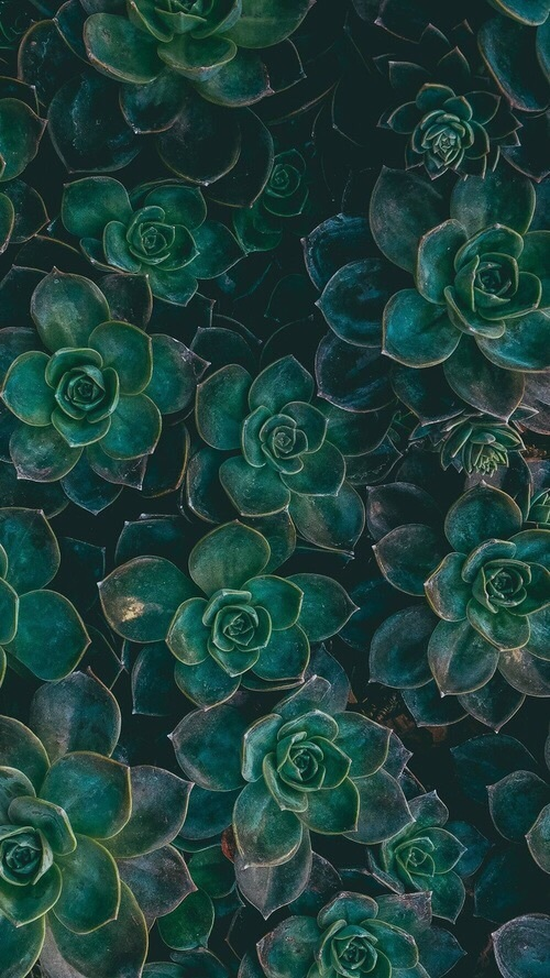 Succulent Aesthetic Green Mood Fairy Forest Green