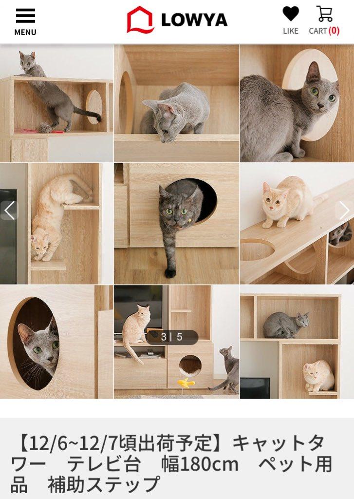 Pin On Chat Cat Katze