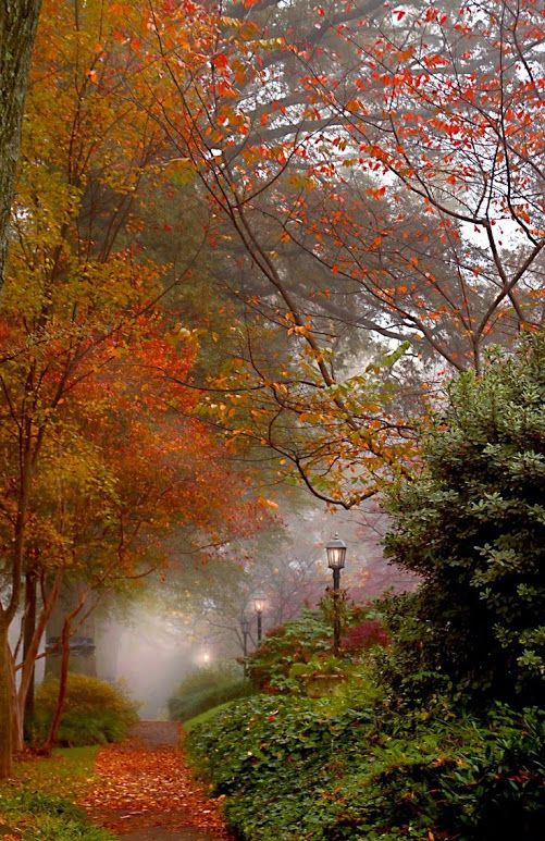 Dream sidewalk #autumnleavesfalling