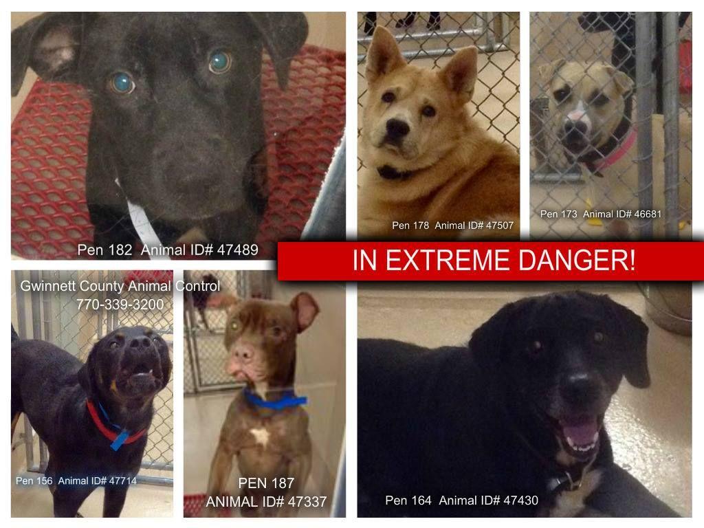 10+ Bakersfield animal care center ideas
